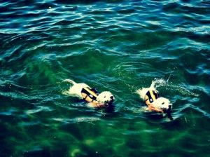 Mac and Skye Swimming
