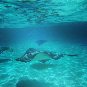 Grand Cayman: Stingrays